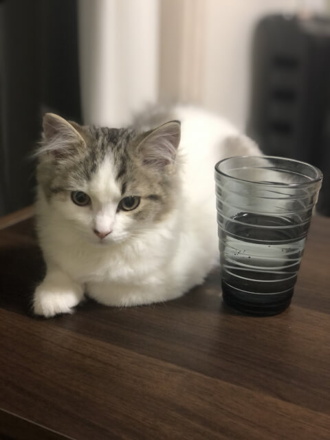 cat_and_water