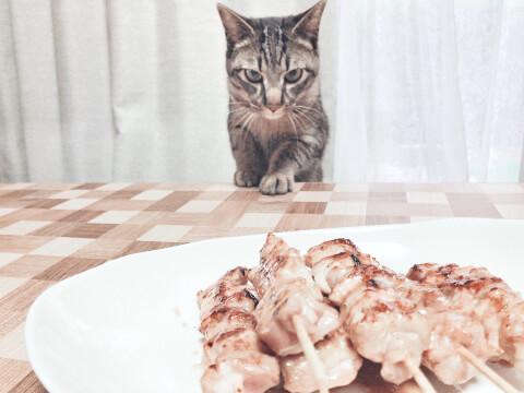 cat_and_yakitori