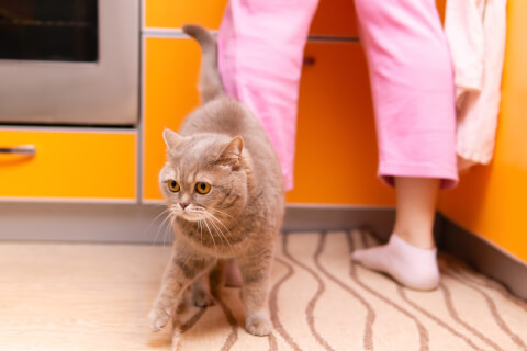 甘えん坊 猫 留守番 特徴 育て方