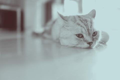 cat_boring