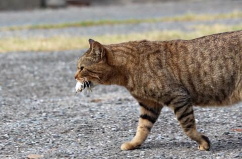 cat_catch_fish