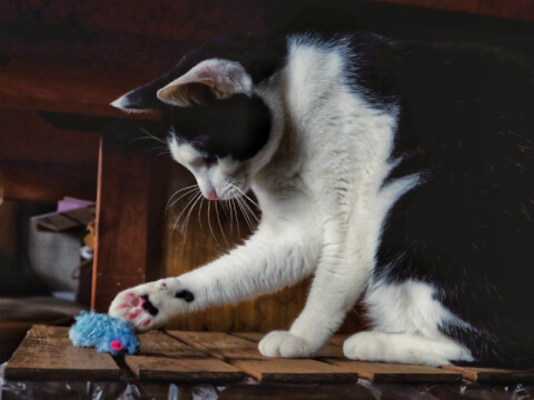cat_catch_mouse_toy