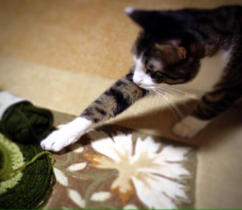 cat_catch_yarn