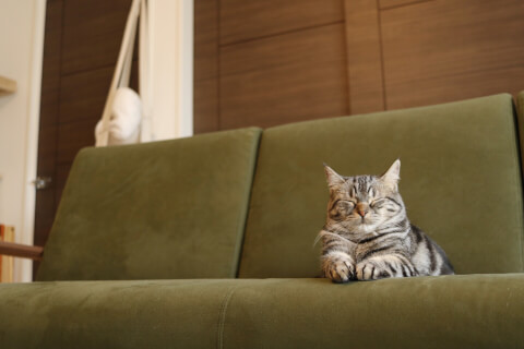 cat_close_eyes