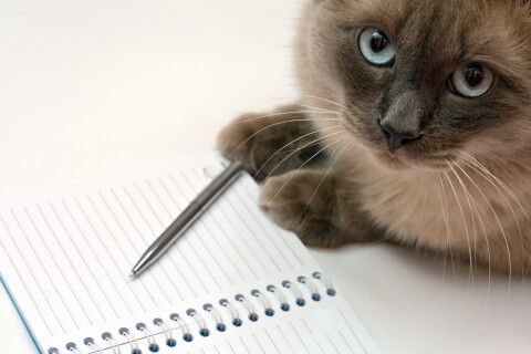 猫 里親 譲渡会 保健所 動物病院 子猫