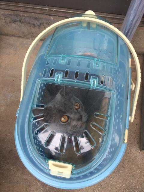 cat_in_carry_case
