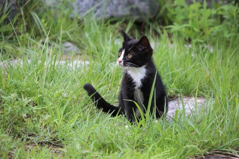 cat_in_the_garden