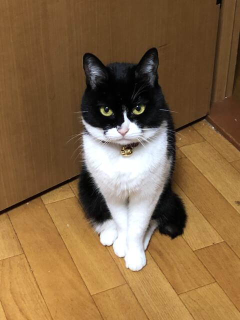 cat_look_up