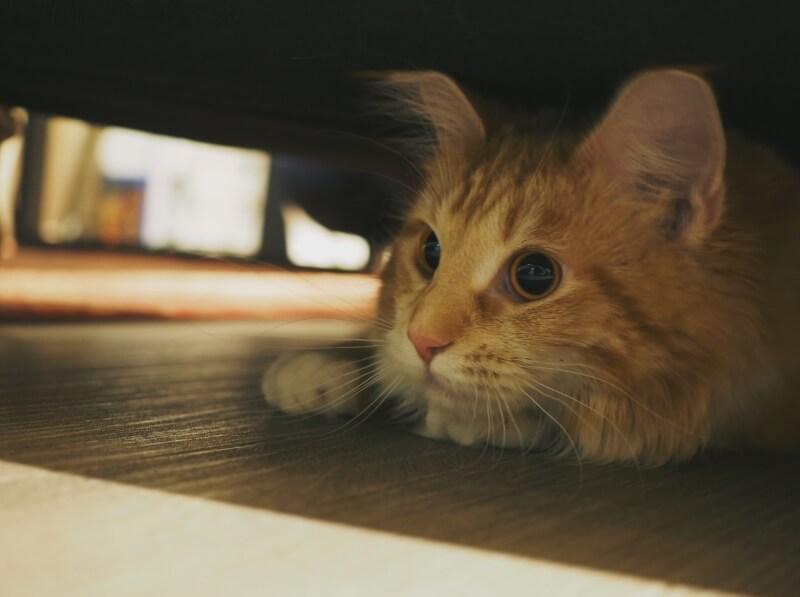 猫に元気がないときの原因と対処法 Petpedia