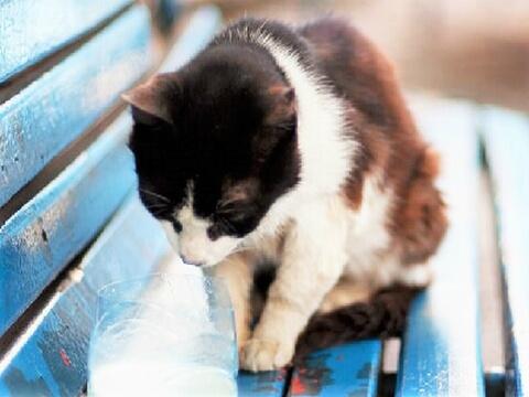 Cat_Milk