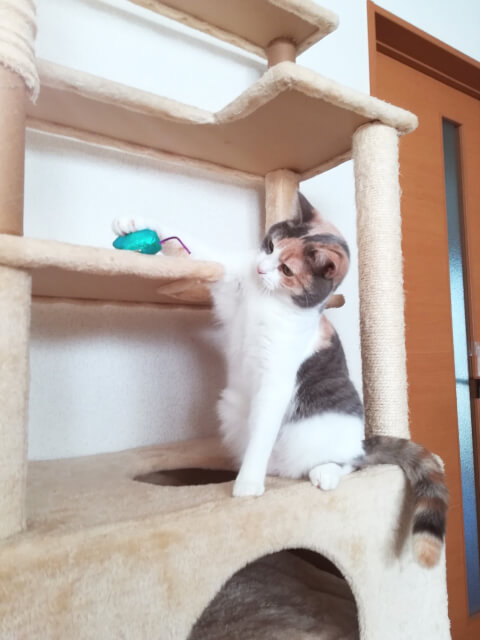 cat_play_on_cat_tower