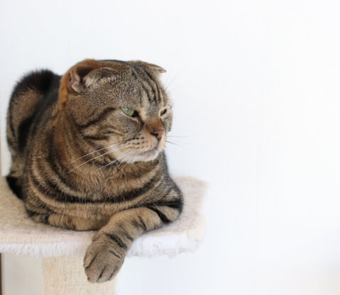 cat_rest_of_tower