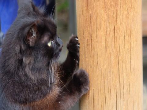 cat_scratcher_claw