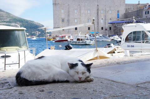 cat_sleep_harbor