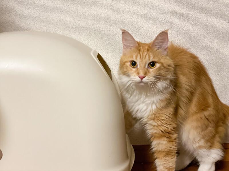 猫 トイレ おすすめ