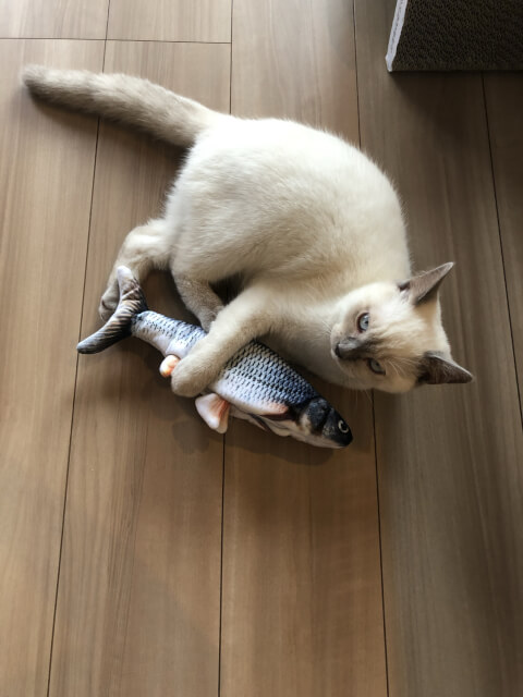 cat_with_fish_toy
