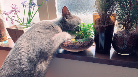 cat_with_herbs
