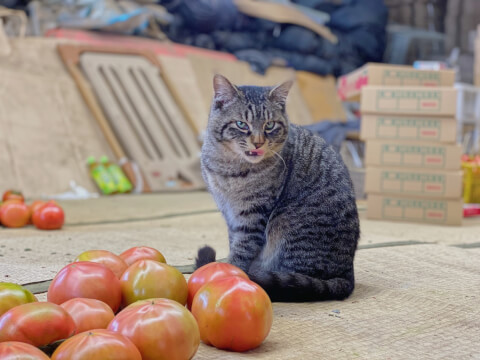cat_with_tomato