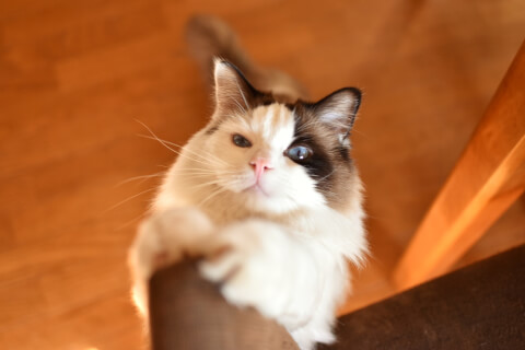 爪とぎをする猫を上から