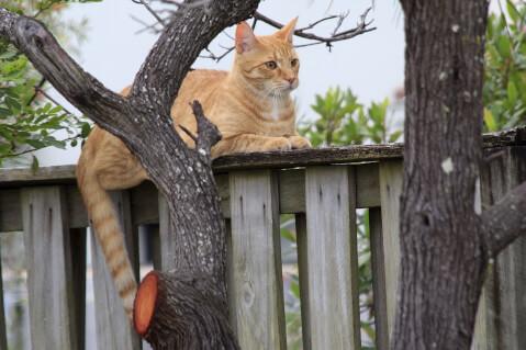 茶色い野良ネコ
