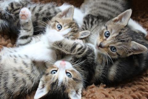 子猫3匹アップ