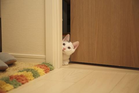 ドアから顔を出す猫