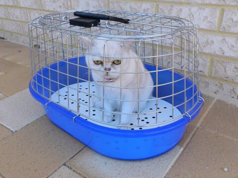 青いケージに入った猫