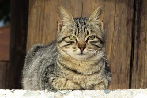 屋外で香箱座りをする猫