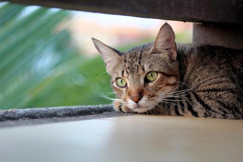 狭いところでふせる猫