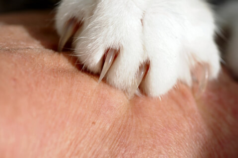 猫の前脚アップ