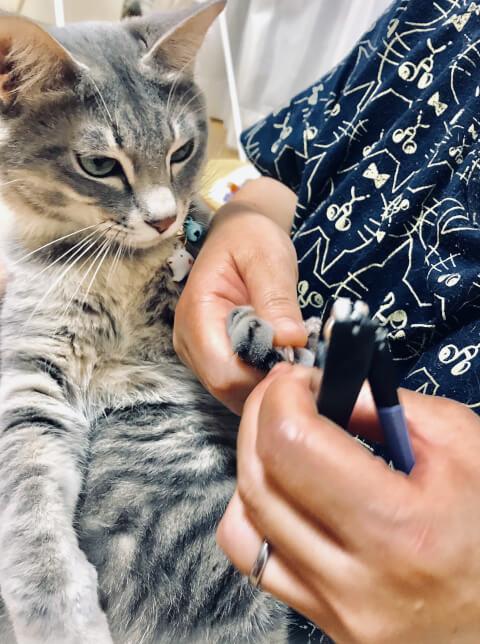 爪切りをしている猫
