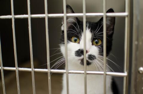 ケージの向こうにいる黒白猫
