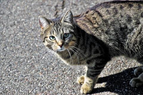 アスファルトの上にいる猫