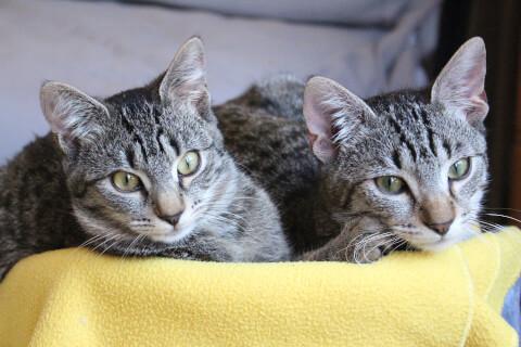 黄色いブランケットの上にいる2匹の猫