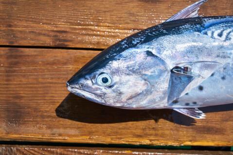 元記事より、魚の顔周辺アップ