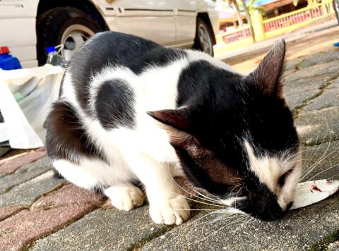 車の横で魚をくわえる猫