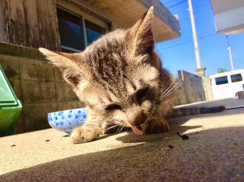 屋外で刺身をもらう猫