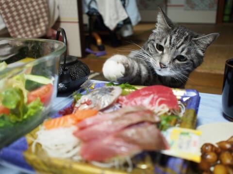 刺身を盗もうとする猫