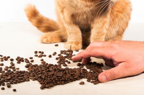 ドライフードと猫と人の手