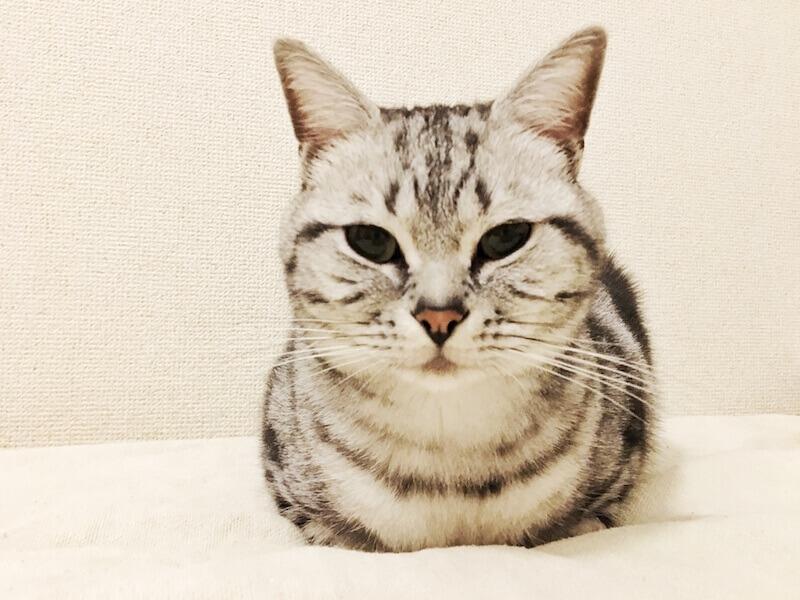 座り 名前 猫 方