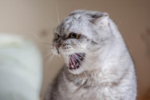 猫 鳴き声 低い 高い 意味 種類 うるさい