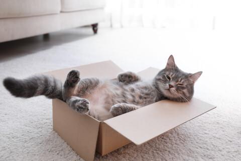 猫 病気 サイン 症状 人間 皮膚 種類 ストレス