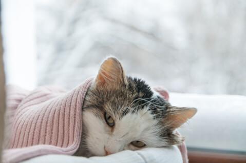 猫 病気 サイン 症状 人間 皮膚 種類