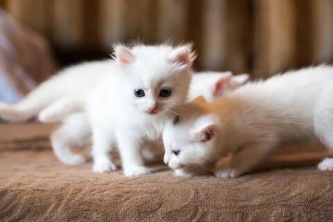 猫 予防接種 義務 毎年 頻度 副作用 種類 時期