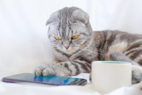 猫 アプリ スマホ 遊ぶ おすすめ かわいい