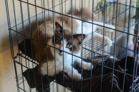 猫 ケージ おすすめ トイレ 必要 アイリスオーヤマ 大型 いつまで