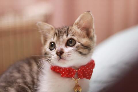 猫 子猫 首輪 可愛い