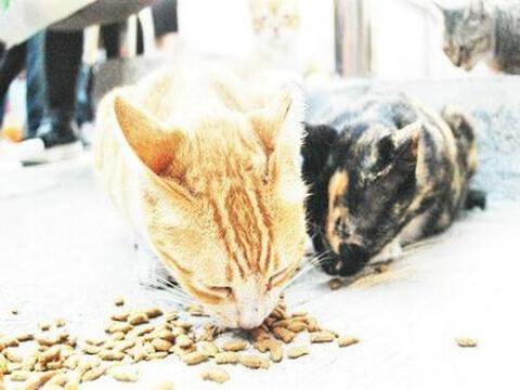 cat_food
