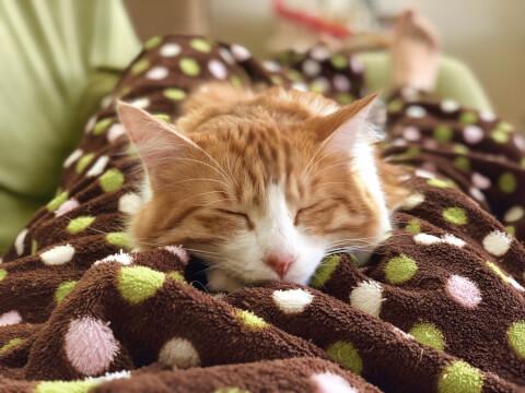 猫 毛布 リラックス