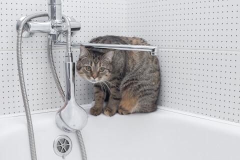 猫 シャンプー おすすめ こつ 嫌がる 頻度 やり方